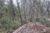 terrain abeille P1030622